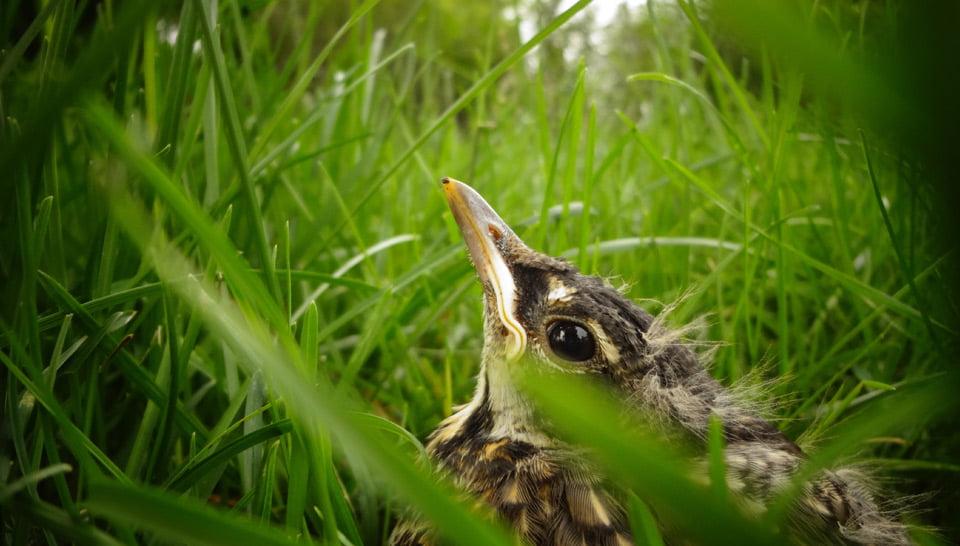 Baby bird in the grass